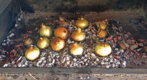 The onions are seated into the coals as they begin to cook from their bottoms