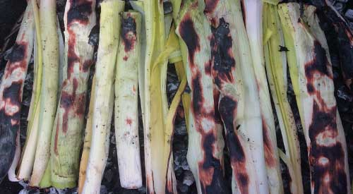 COAL-FIRED LEEKS TERRINE begins by cooking the leeks over a bed of hot ember coals!